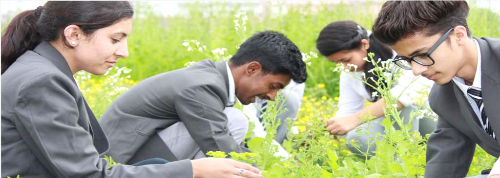 B.Sc. - Agriculture (Hons.)